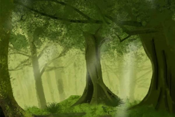 forest2EEB4F52-EA9A-56AE-D5A4-B210F0479DA5.png